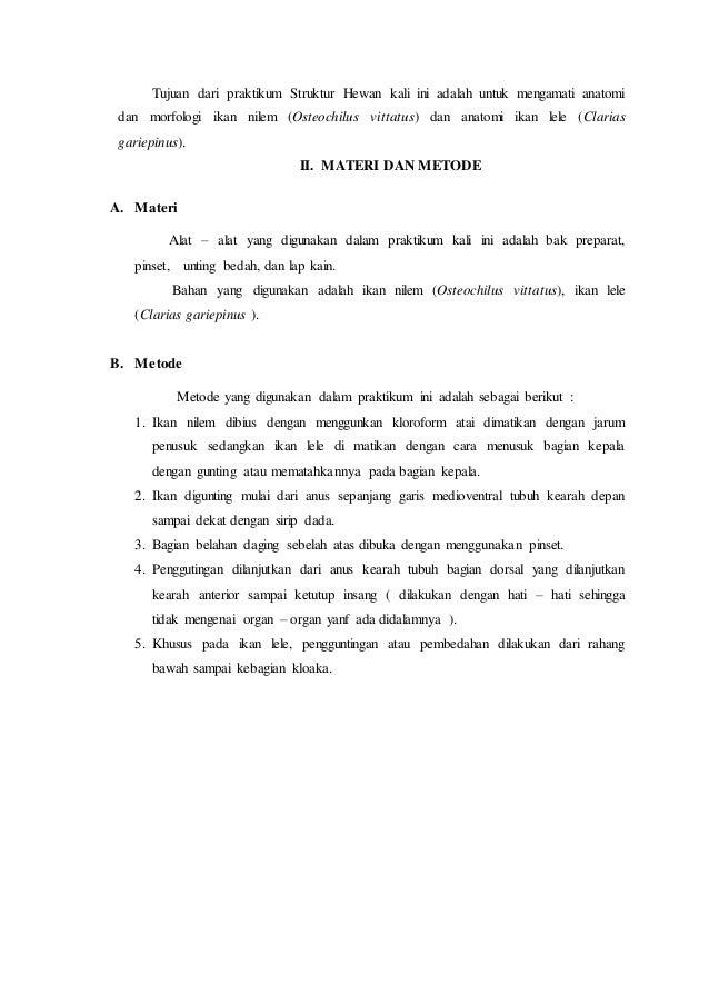 Laporan anatomi ikan nilem dan ikan lele