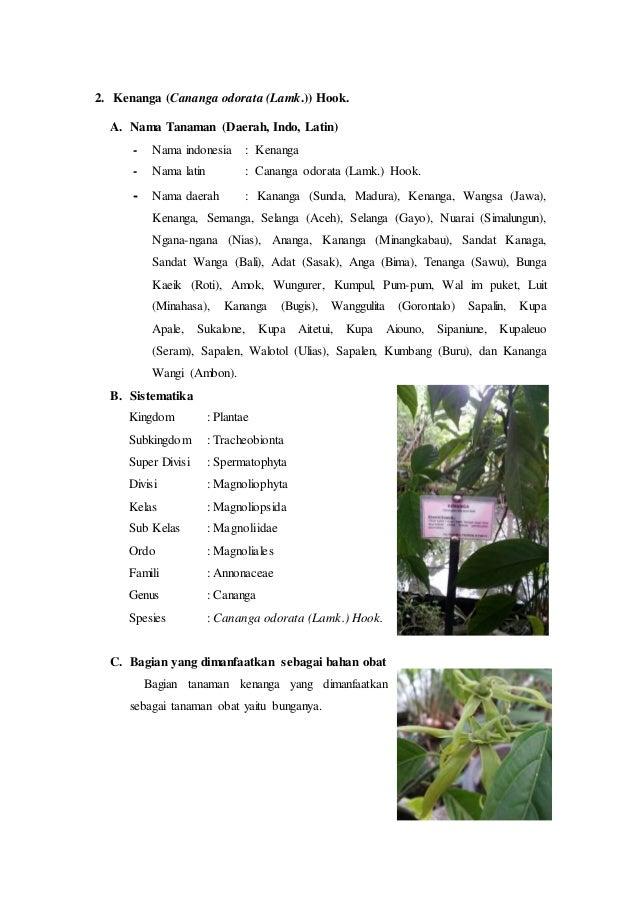 Hasil Observasi Tanaman Bunga Mawar Informasi Seputar Tanaman Hias