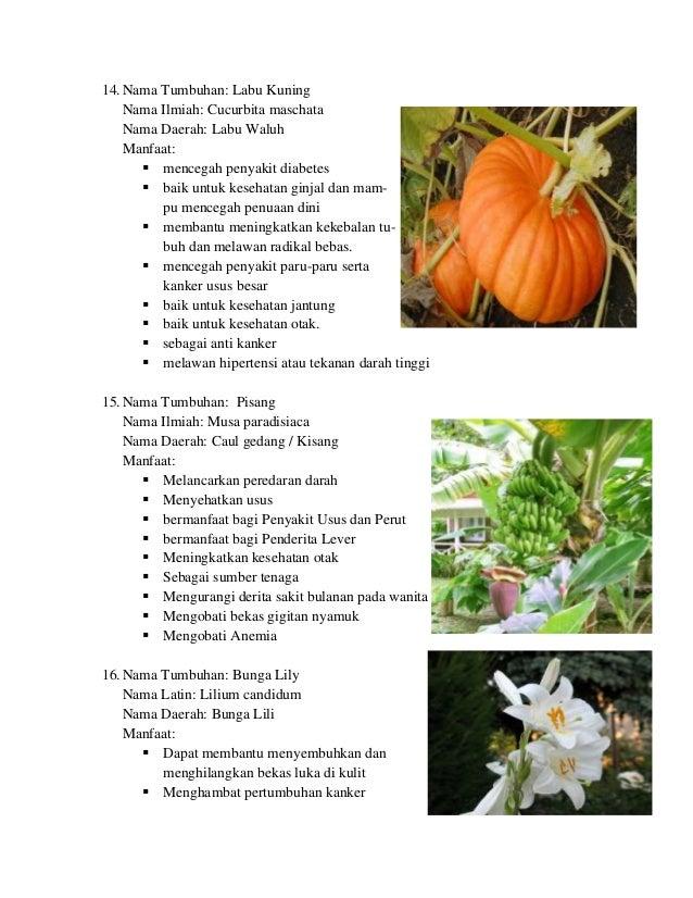 550 Gambar Serat Tumbuhan Dan Hewan Beserta Manfaatnya Terbaru