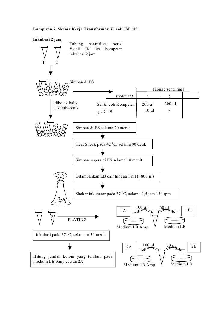 Laporan Praktikum Bologi Sel Molekuler Ma Ruf P2ba09006