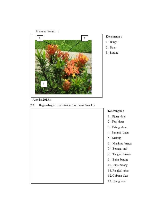 Download 63+ Gambar Bunga Asoka Dan Keterangannya Gratis
