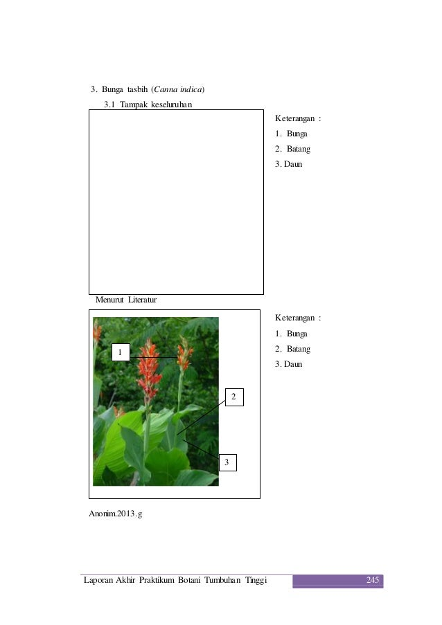 Laporan praktikum botani tumbuhan tinggi 8 sub classis zingiberidae d 11 ccuart Gallery