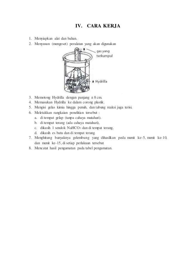 Laporan Resmi Praktikum Biologi Fotosintesis