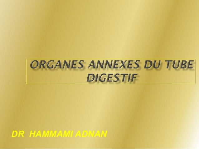 DR HAMMAMI ADNAN