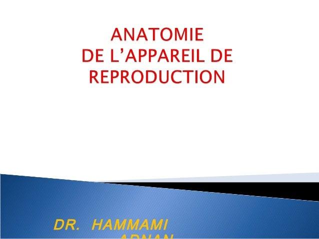 DR. HAMMAMI