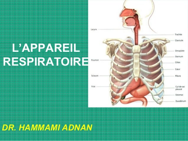L'APPAREIL RESPIRATOIRE DR. HAMMAMI ADNAN