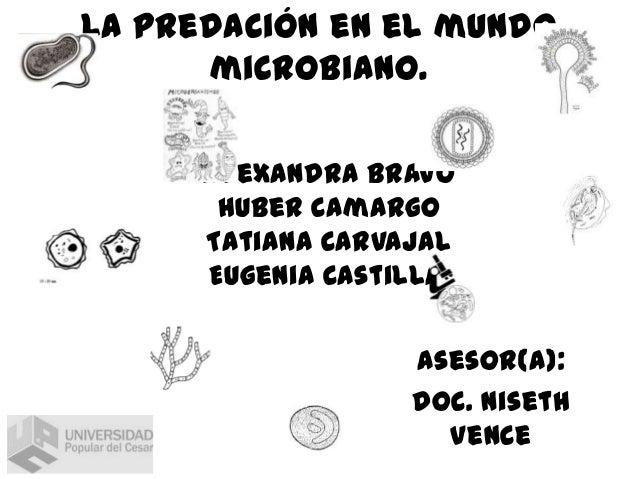 La predación en el mundo microbiano. Alexandra bravo Huber Camargo Tatiana Carvajal Eugenia Castilla. Asesor(a): Doc. Nise...