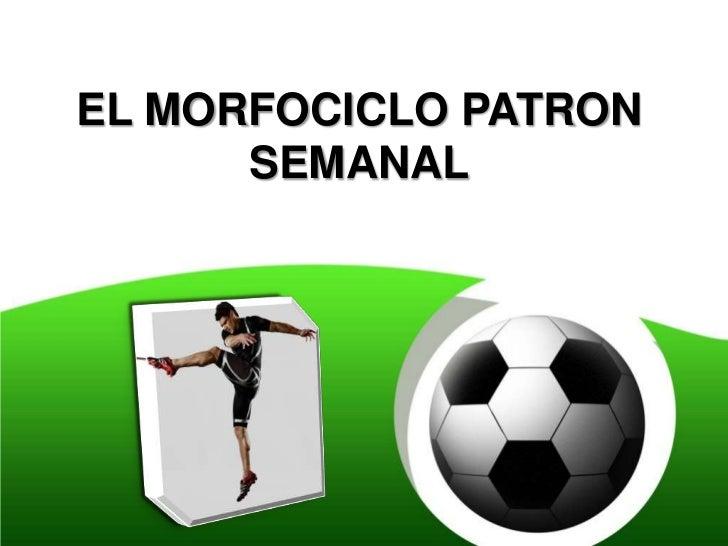 EL MORFOCICLO PATRON      SEMANAL