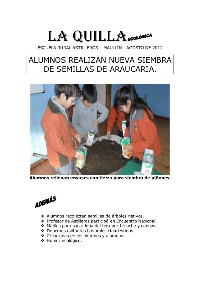 LA QUILLAESCUELA RURAL ASTILLEROS – MAULLÍN - AGOSTO DE 2012 ALUMNOS REALIZAN NUEVA SIEMBRA DE SEMILLAS DE ARAUCARIA. Alum...