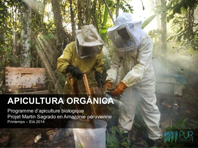 Programme d'apiculture biologique Projet Martin Sagrado en Amazonie péruvienne Printemps – Eté 2014 APICULTURA ORGÁNICA  ...