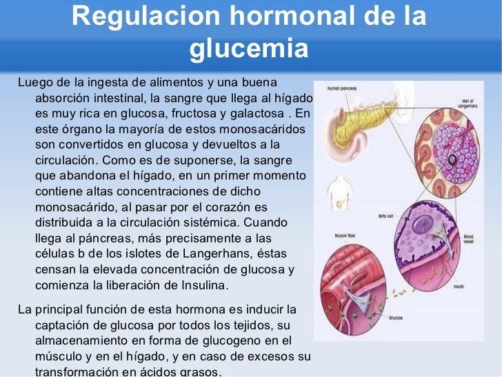 q son las hormonas esteroideas