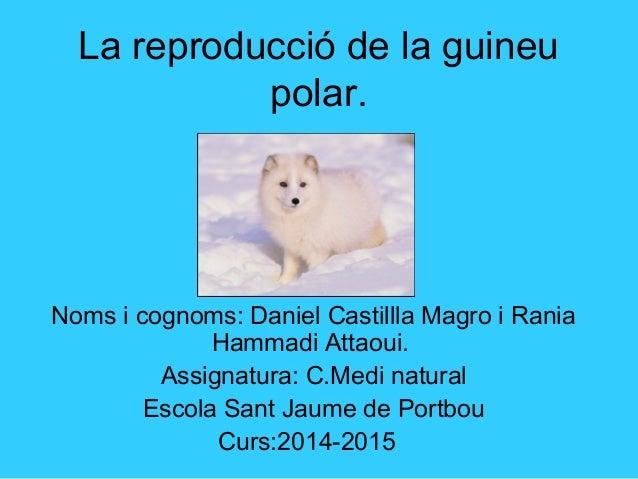 La reproducció de la guineu polar. Noms i cognoms: Daniel Castillla Magro i Rania Hammadi Attaoui. Assignatura: C.Medi nat...