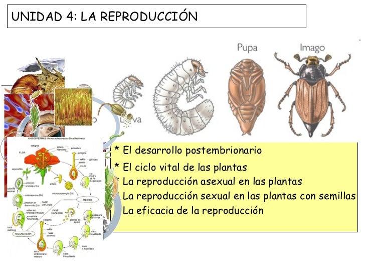 * La reproducción y el ciclo vital * La reproducción asexual en los animales  * La reproducción sexual en los animales * L...