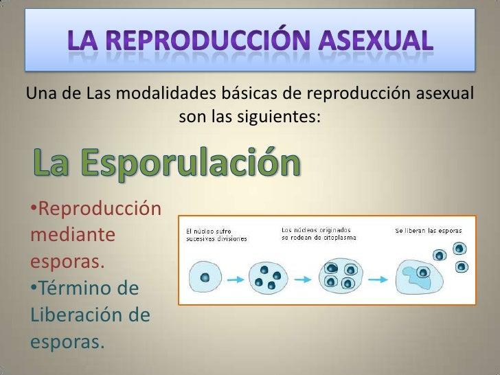 Reproduccion asexual biologia