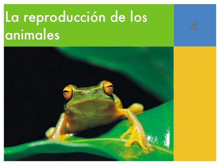 La reproducción de los animales 4