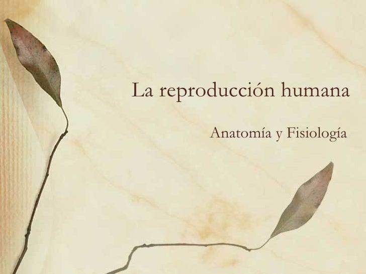 La reproducción humana Anatomía y Fisiología
