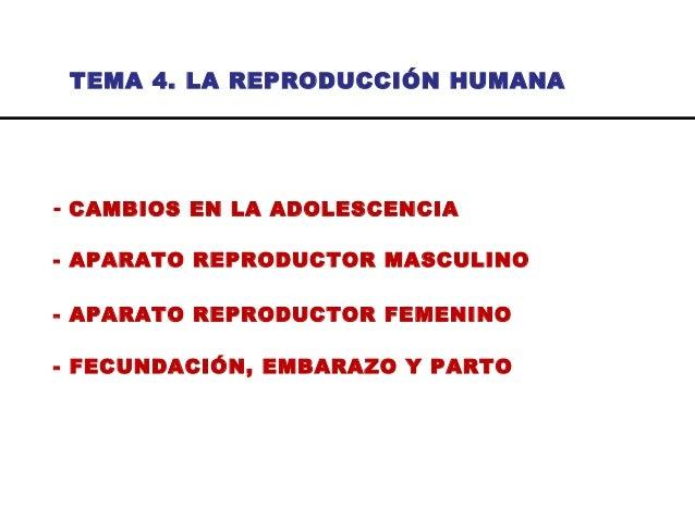 TEMA 4. LA REPRODUCCIÓN HUMANA - CAMBIOS EN LA ADOLESCENCIA - APARATO REPRODUCTOR MASCULINO - APARATO REPRODUCTOR FEMENINO...