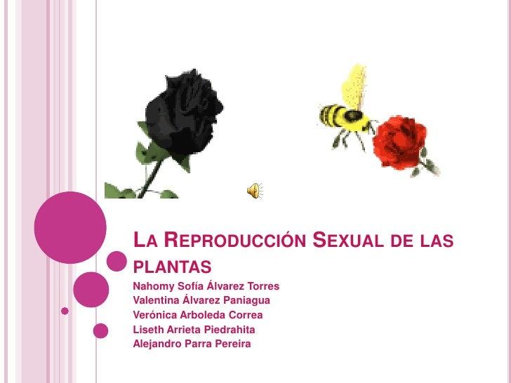 LA REPRODUCCIÓN SEXUAL DE LASPLANTASNahomy Sofía Álvarez TorresValentina Álvarez PaniaguaVerónica Arboleda CorreaLiseth Ar...