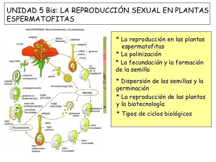 * La reproducción en las plantas  espermatofitas * La polinización * La fecundación y la formación de la semilla * Dispers...