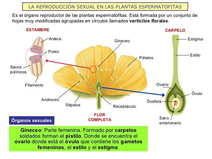 Como es la reproduccion sexual de las plantas con flores