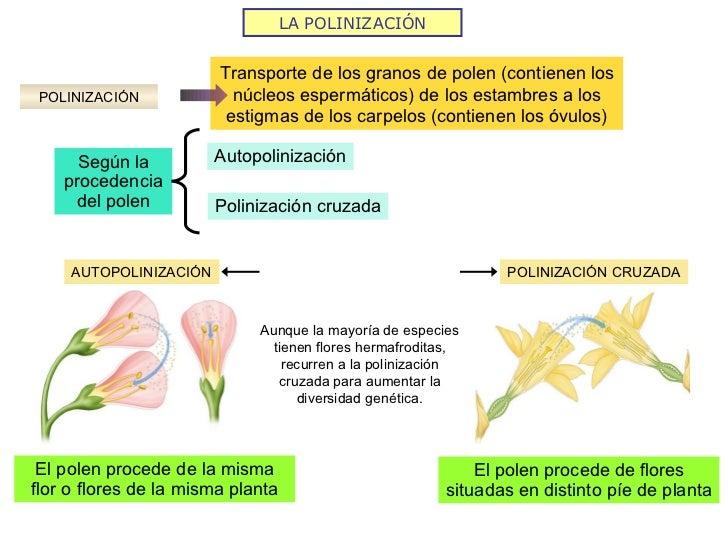 Proceso de reproduccion sexual de las plantas wikipedia