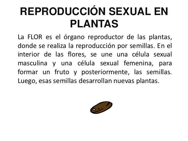 La reproduccion for Como se llaman las plantas ornamentales
