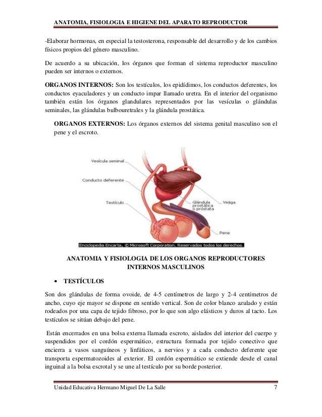 Excepcional Sistema De La Anatomía Y La Fisiología Reproductiva ...