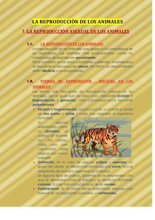 LA REPRODUCCIÒN DE LOS ANIMALES 1. LA REPRODUCCIÒN ASEXUAL DE LOS ANIMALES 1.1. La reproducción en los animales La reprodu...