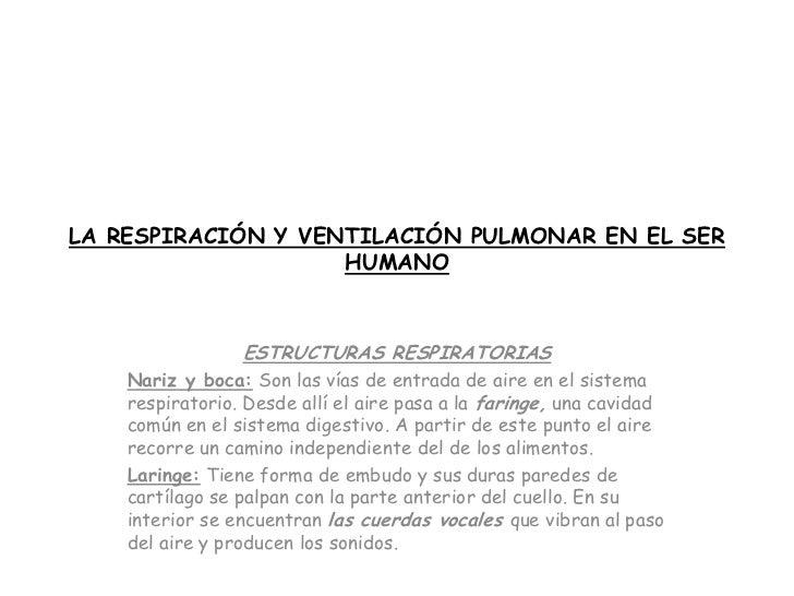 La Respiracion En El Ser Humano: La Respiración Y Ventilación Pulmonar En El Ser