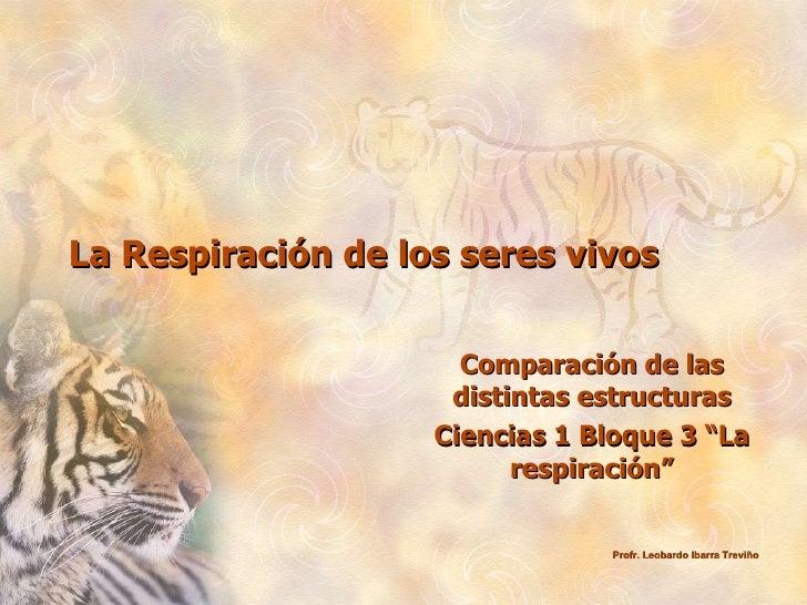 """La Respiración de los seres vivos Comparación de las distintas estructuras Ciencias 1 Bloque 3 """"La respiración"""" Profr. Leo..."""