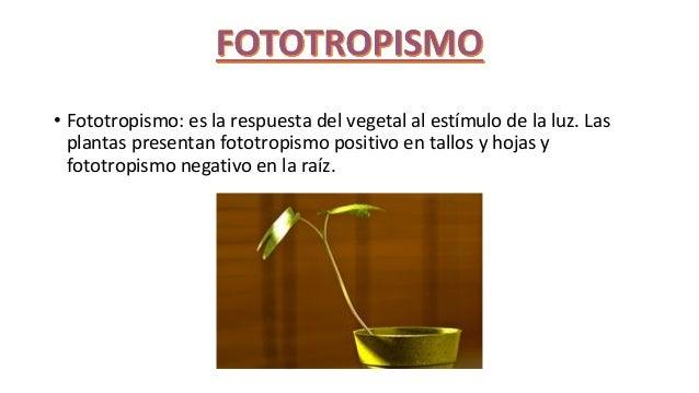 Seres vivos com fototropismo positivo 16