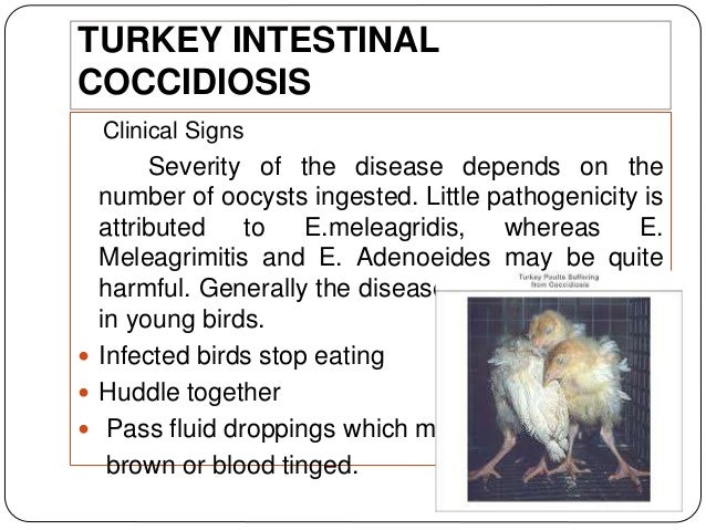 Intestinal Parasites of Poultry