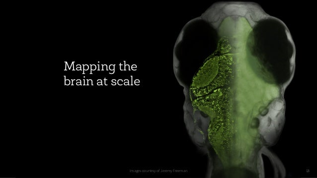 13 Mapping the brain at scale Images courtesy of Jeremy Freeman