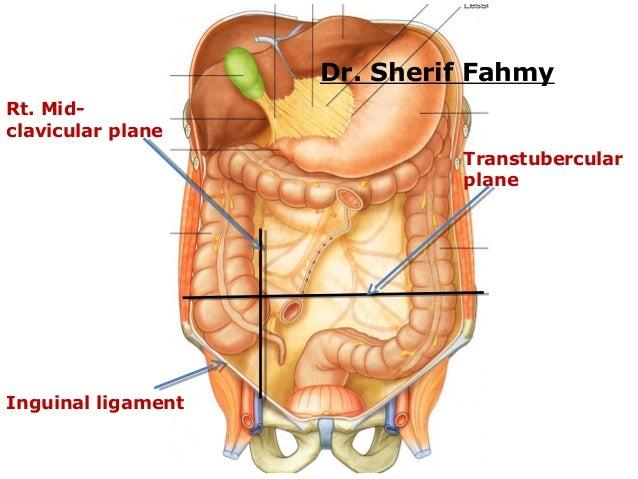 Large Intestines (Anatomy of the Abdomen)