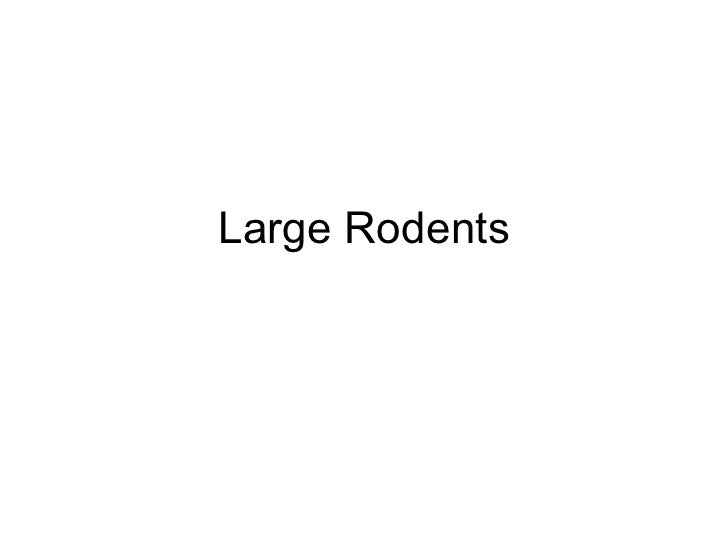 Large Rodents
