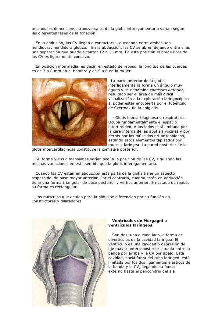 Asombroso Qué Significa La Aducción De La Anatomía Bosquejo ...
