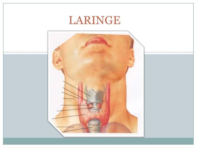 laringe-1-638.jpg?cb=1481580444