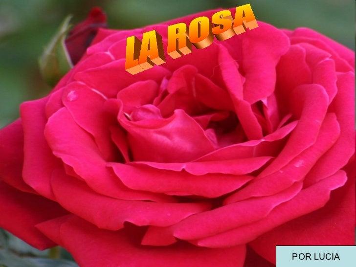 LA ROSA POR LUCIA