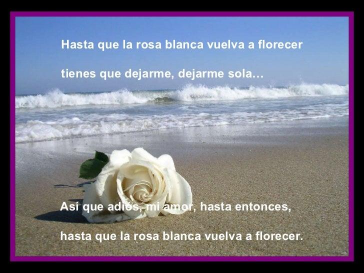 La Rosa Blanca De Atenas