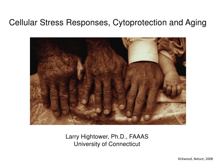 Cellular Stress Responses, Cytoprotection and Aging              Larry Hightower, Ph.D., FAAAS                 University ...