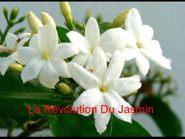 La Révolution Du Jasmin
