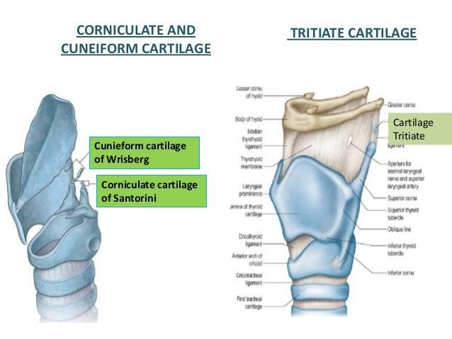 Pericardium 15468400 additionally 35 Cervical Vertebra moreover Imaging Of Salivary Gland Tumours furthermore Foramen Lacerum additionally 8458920. on posterior cavity