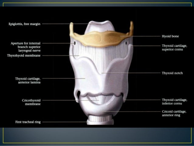Larynx Anatomy Ct And Mri