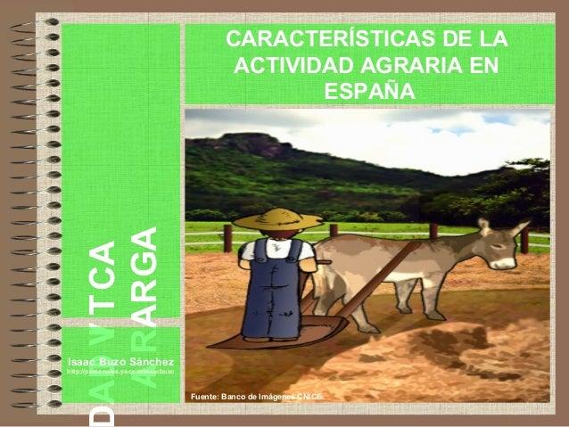 ACTIVIDA AGRARIA Isaac Buzo Sánchez http://personales.ya.com/isaacbuzo CARACTERÍSTICAS DE LA ACTIVIDAD AGRARIA EN ESPAÑA F...