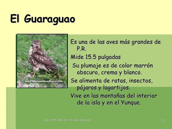 Name Puertorriqueno: Las Aves De Puerto Rico1