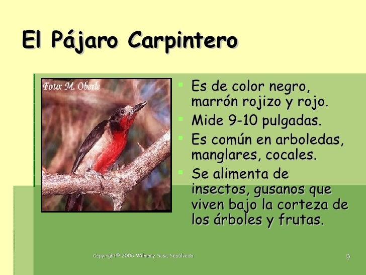 Las aves de puerto rico1 for Caracol de jardin de que se alimenta