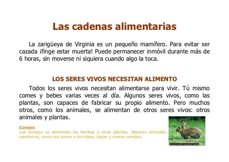 Las cadenas alimentarias    La zarigüeya de Virginia es un pequeño mamífero. Para evitar ser cazada ¡finge estar muerta! P...