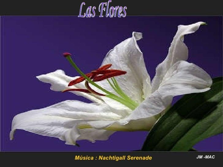 Música : Nachtigall Serenade JM -MAC Las Flores