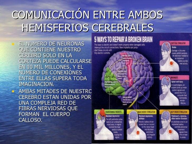 COMUNICACIÓN ENTRE AMBOS   HEMISFERIOS CEREBRALES <ul><li>EL NUMERO DE NEURONAS QUE CONTIENE NUESTRO CEREBRO SOLO EN LA CO...