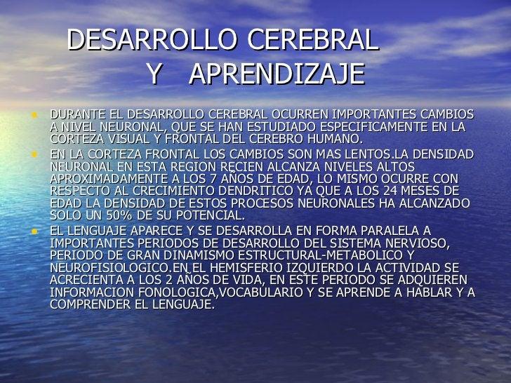 DESARROLLO CEREBRAL    Y  APRENDIZAJE <ul><li>DURANTE EL DESARROLLO CEREBRAL OCURREN IMPORTANTES CAMBIOS A NIVEL NEURONAL,...